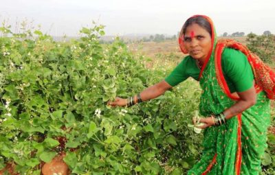 Meet Rahibai, The Lady Who Saved Over 80 Varieties of Native Seeds!